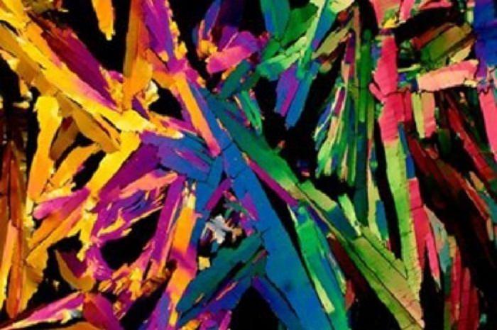 Imagens vistas do microscópio