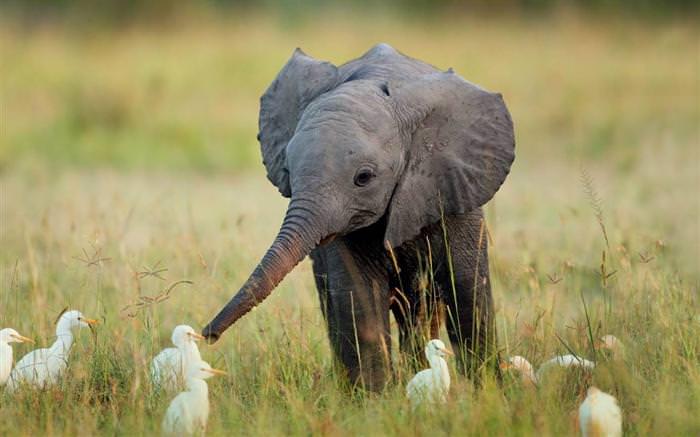 Estas Fotos de Animais Vão Alegrar o Seu Dia!