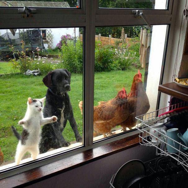 Esses Animais Só Querem Entrar!