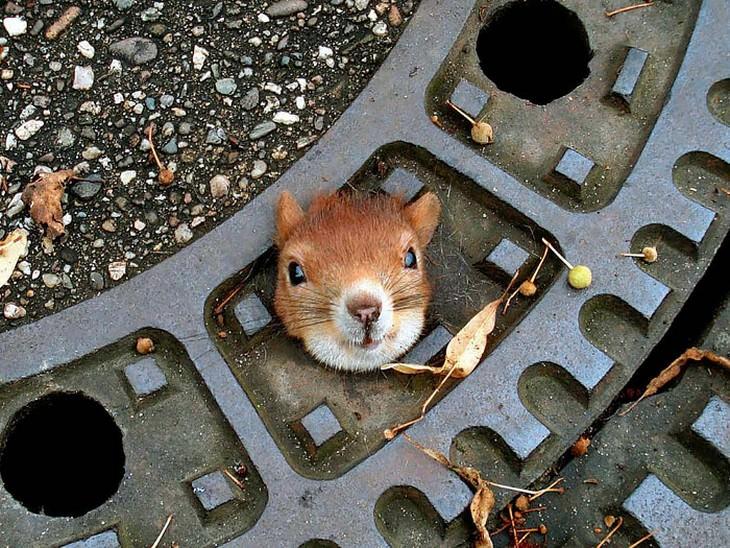 27 fotos dos esquilos mais fofos