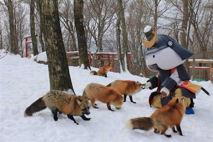 Uma vila de raposas: É um dos lugares mais fofos do planeta!