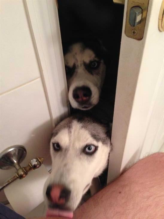 Cães Espaçosos em Lugares Inusitados!
