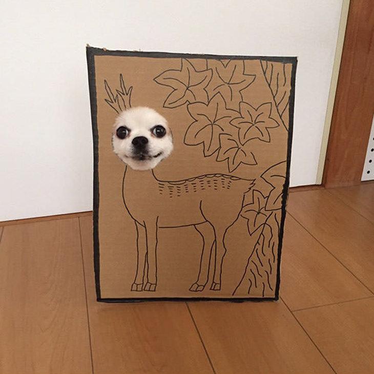 Um cão japonês muito paciente...