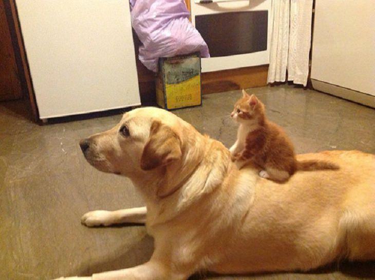 20 cães e gatos que vão encantar o seu coração