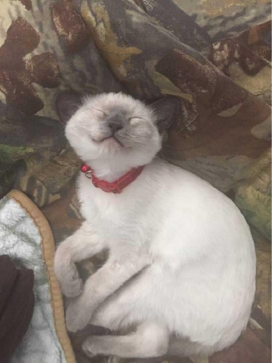 Estas fotos vão te fazer sorrir - animais hilários