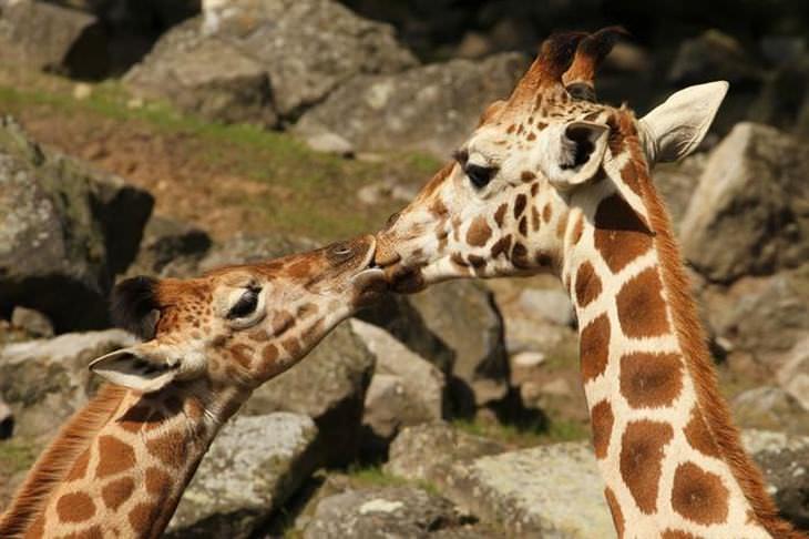 Um beijo dos animais mais fofos do planeta