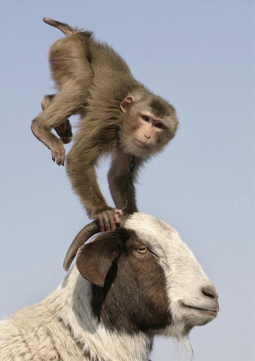 amizades improváveis do mundo animal