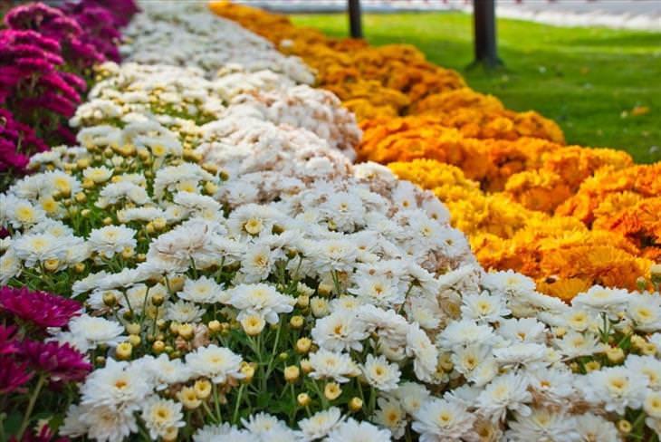 O jardim que mais parece um paraíso Al Ain