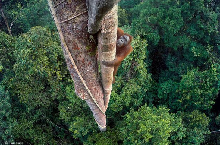 Prêmios de Fotografia de Vida Selvagem do Museu Nacional de Londres