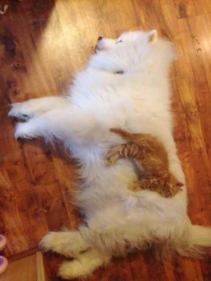 Hilárias fotos de cães e gatos dormindo juntos