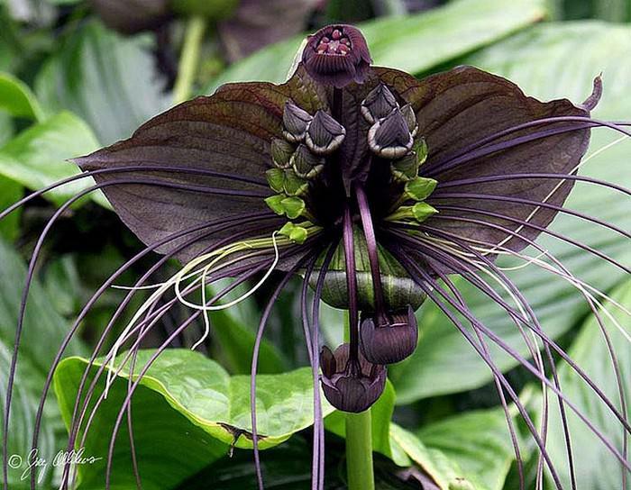 Flores raras e belíssimas