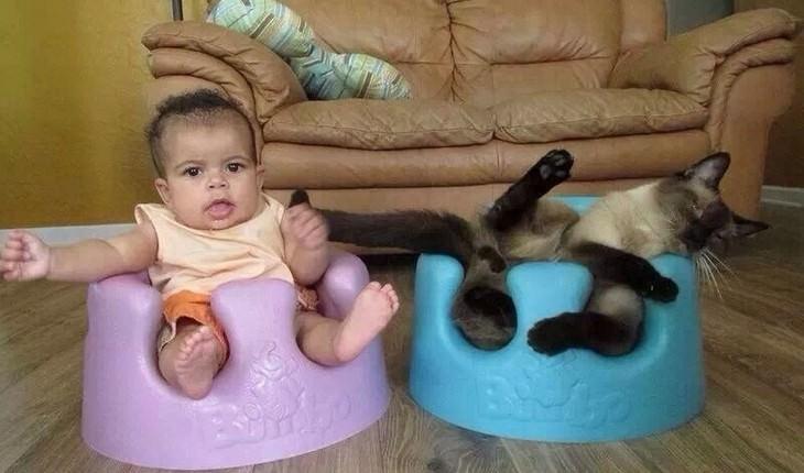 Animais hilários que não conseguem sentar no seu lugar preferido!