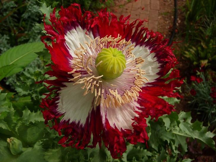 Flores que influênciam em nosso corpo e mente