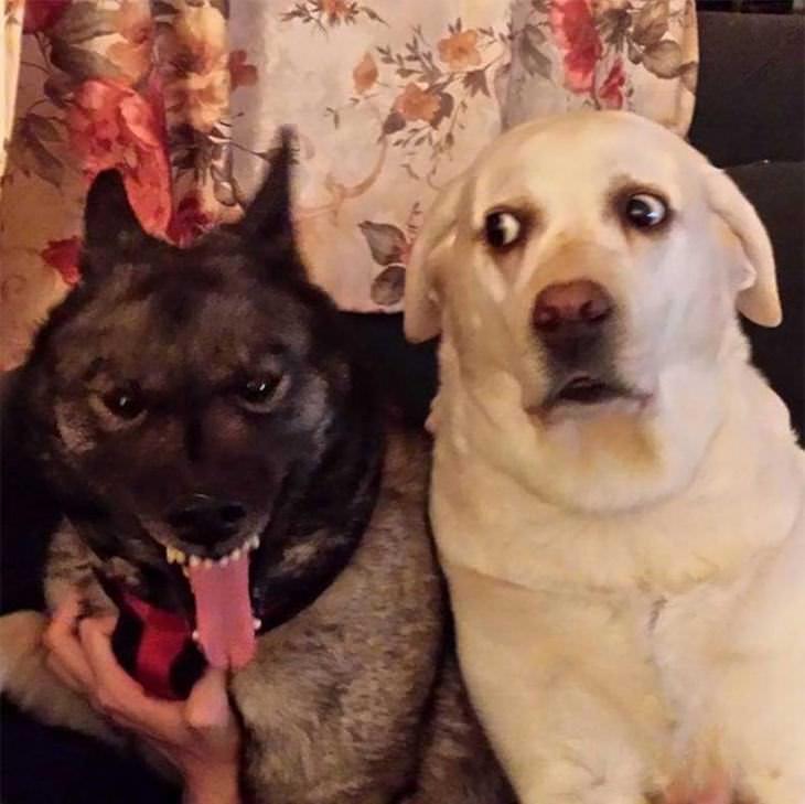 15 cachorros hilários