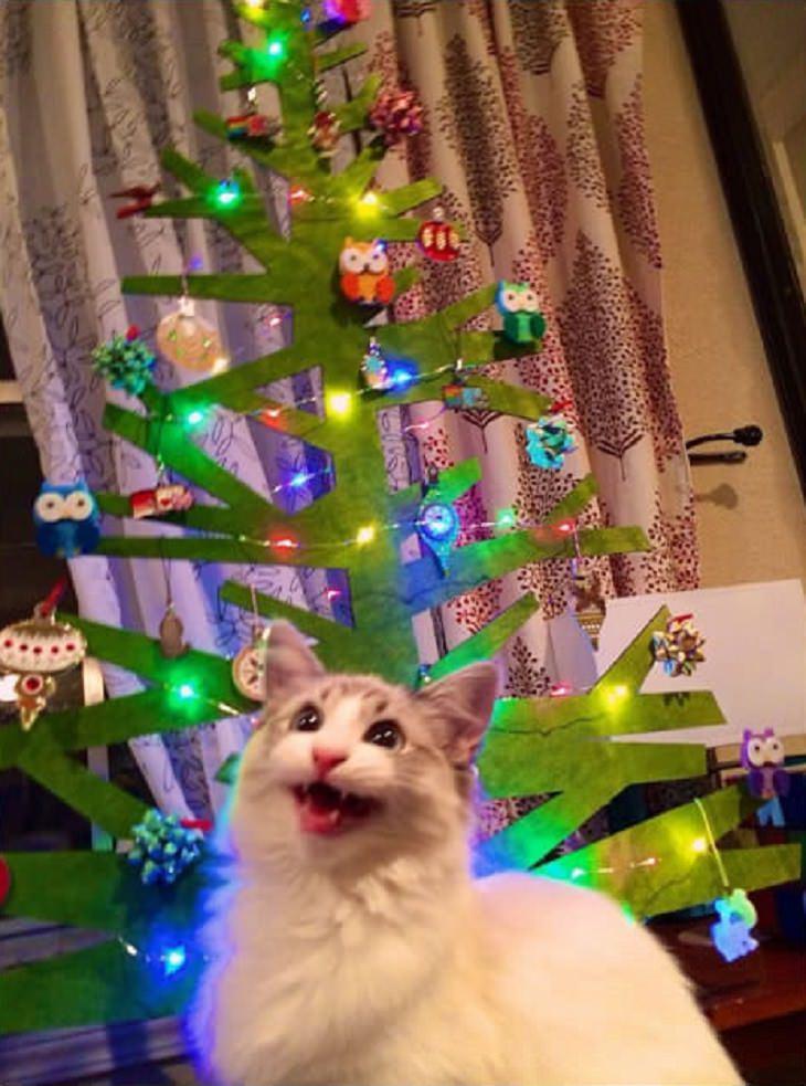 Estes gatos estão realmente animados para o Natal