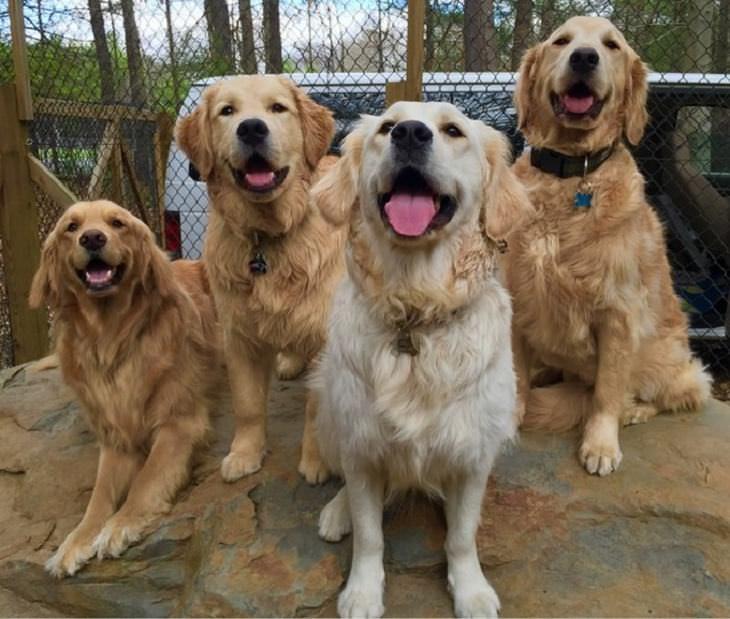 Estes animais te farão sorrir o tempo todo!