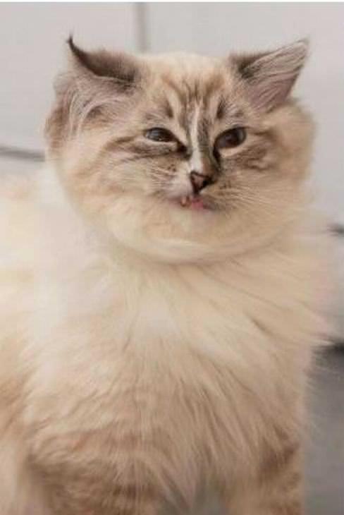 Momentos que gatos não são fotogênicos