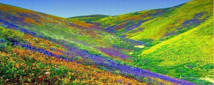 Pare Para Admirar a Beleza Destes Campos De Flores!