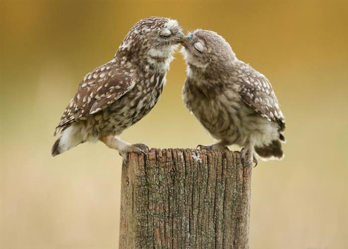 Animais beijoqueiros