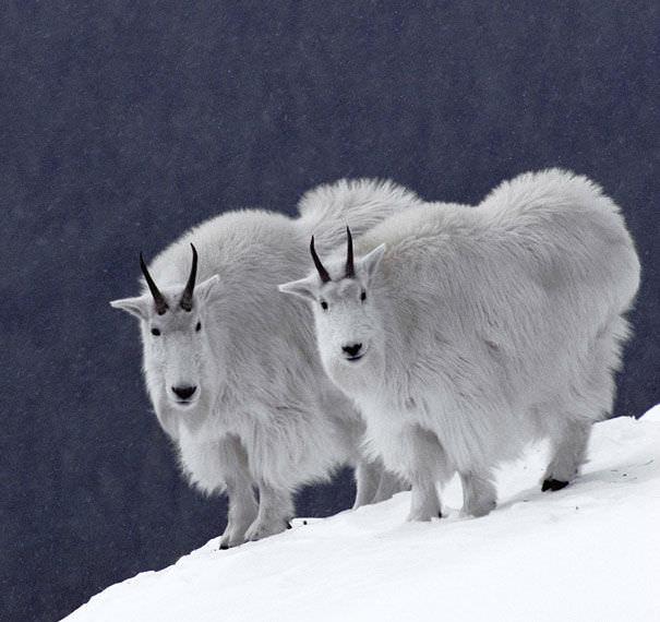 Lindos animais gêmeos