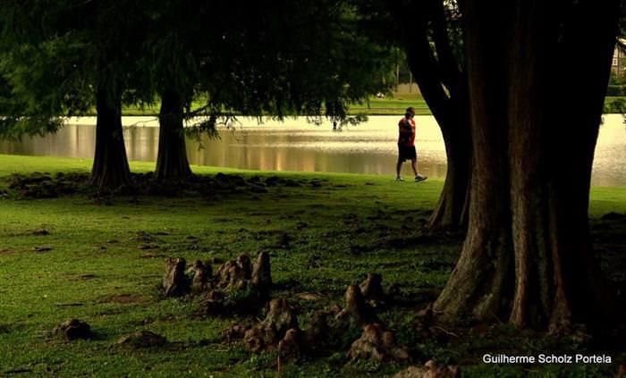 Curitiba 323 Anos