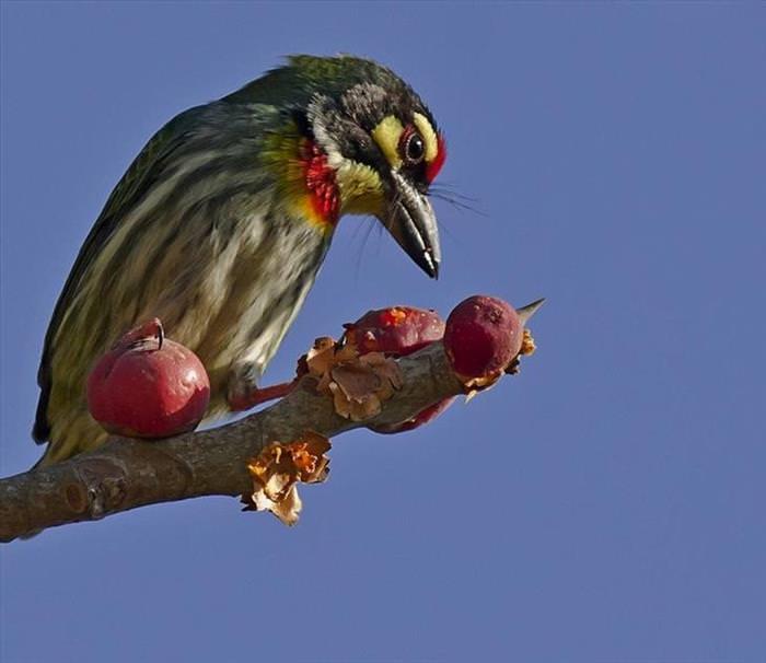 Os Pássaros Mais Lindos do Mundo