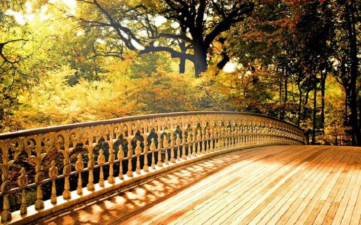 a ponte uma história de perdão