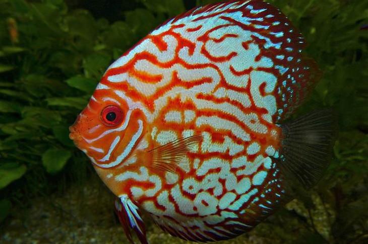 Lindos peixes coloridos