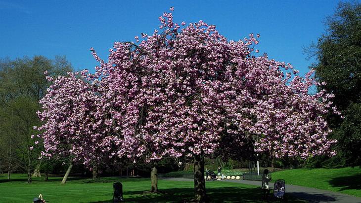 primavera de Londres