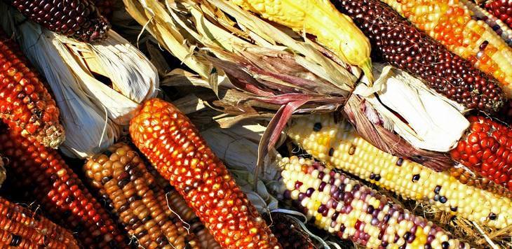 Benefícios do milho