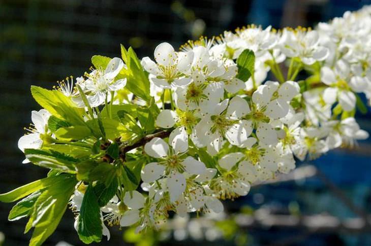 A Árvore que Dá Mais de 40 Tipos de Frutos