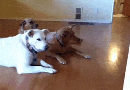 13 momentos divertidos com cachorros