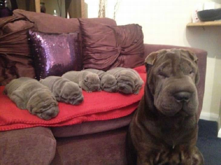 famílias caninas fofas