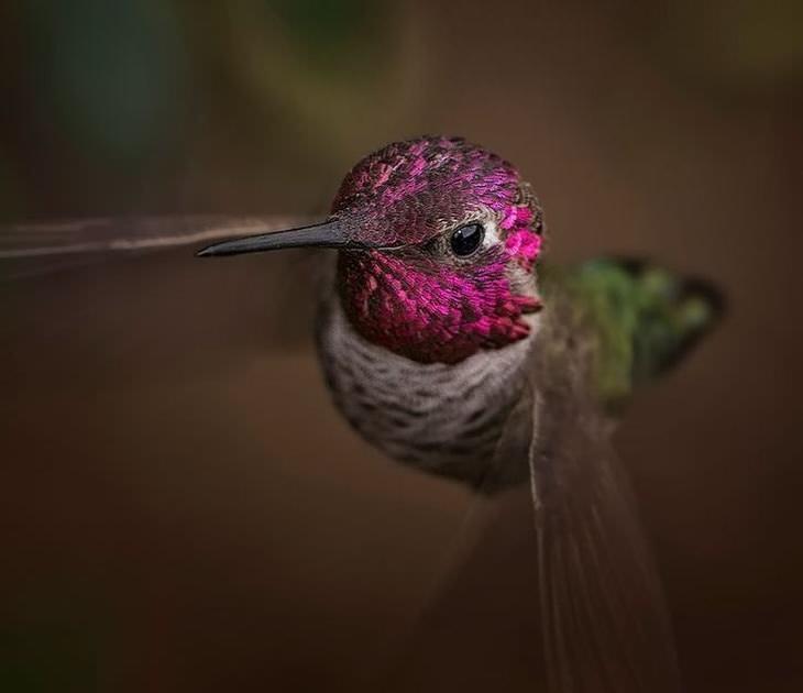 A beleza dos passarinhos Beija-flor