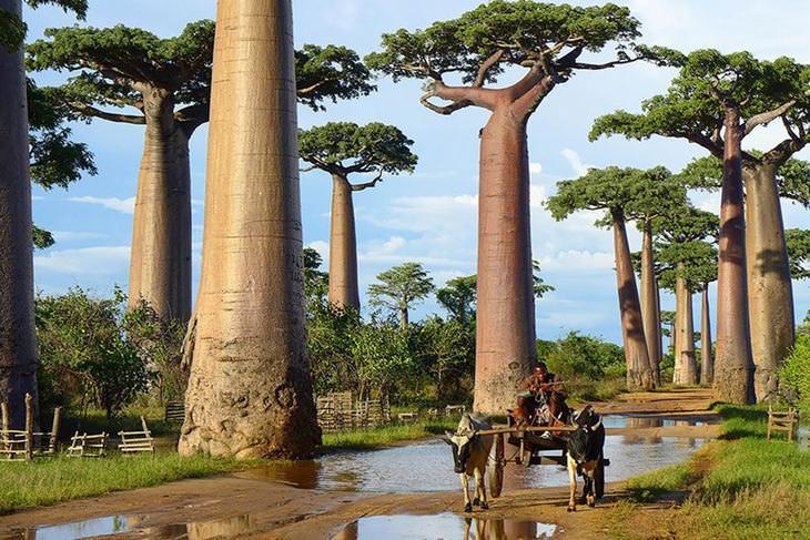 Incríveis árvores que não parecem de verdade