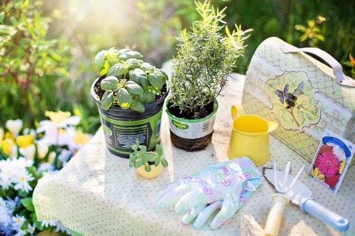 Os 11 erros mais comuns de jardinagem