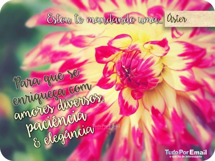 cartão de flor
