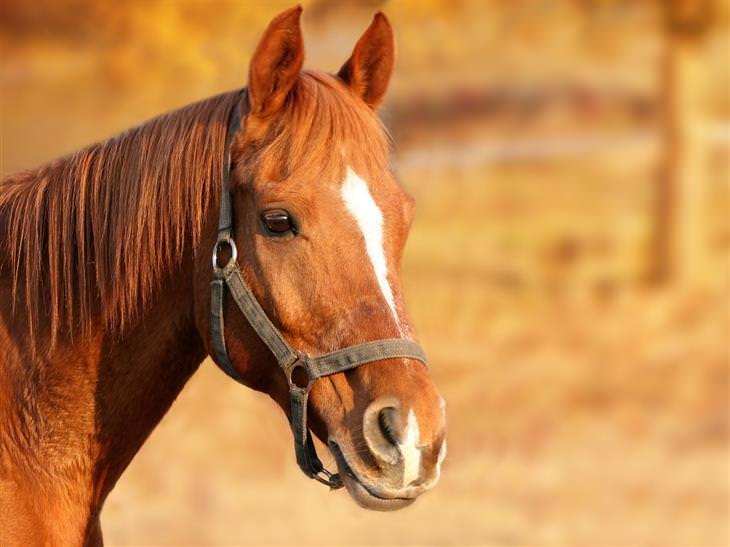 Piada do cavalo que usava outros comandos