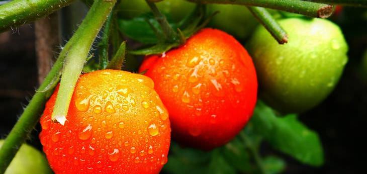 benefícios da jardinagem