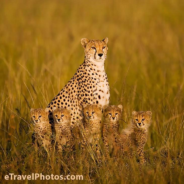 Belíssimo: A Importância da Família