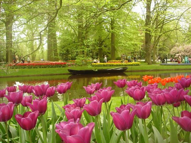 Variedades de tulipas