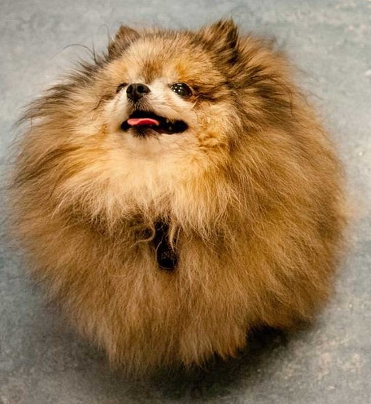 Animais com penteados engraçados