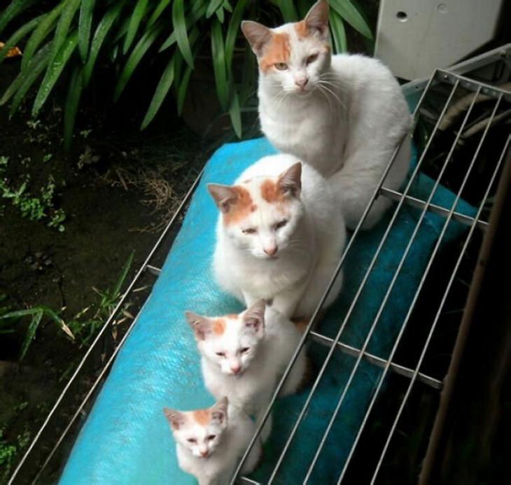 Gatos fofos com seu filhotes