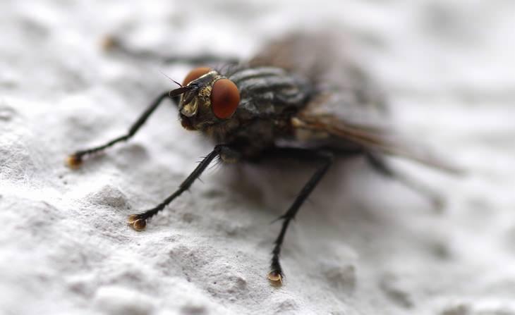 como acabar com moscas