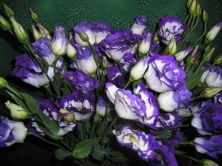 As 10 Flores Mais Caras do Mundo