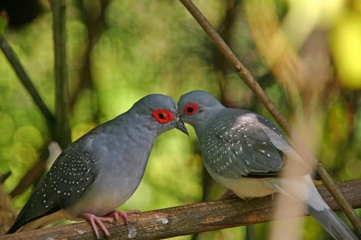 12 Fatos Interessantes Sobre o Beijo
