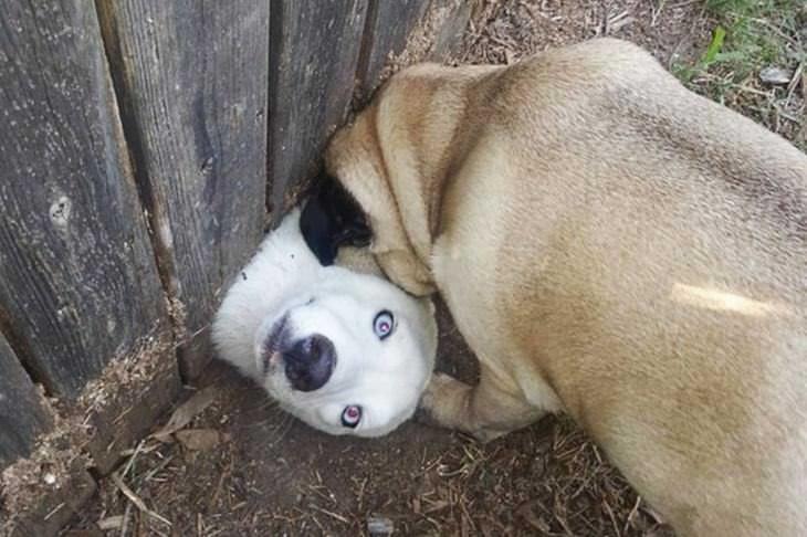 fotos cães cara para fora