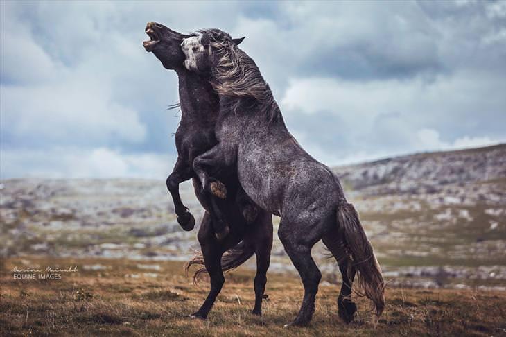 A beleza majestosa desses cavalos selvagens