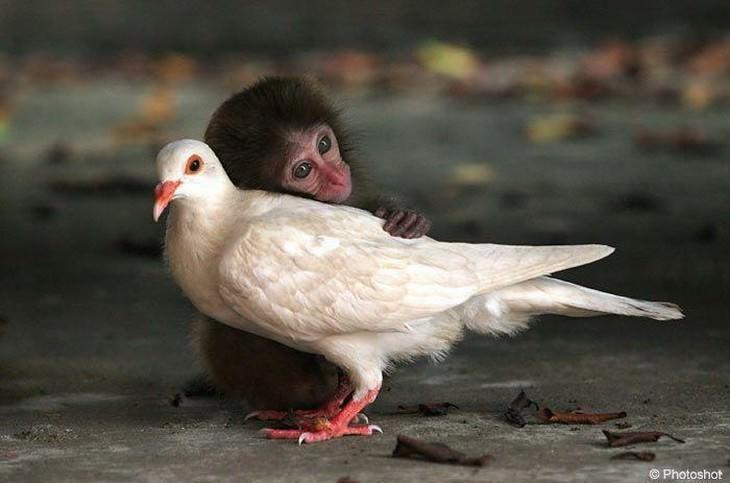 Um Amigo É Alguém...