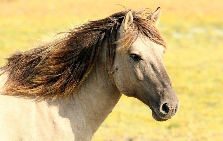 piada cavalo